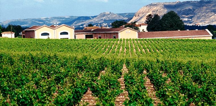 Marqués de Vargas: sembrando pasión y cosechando vinos de excelencia.