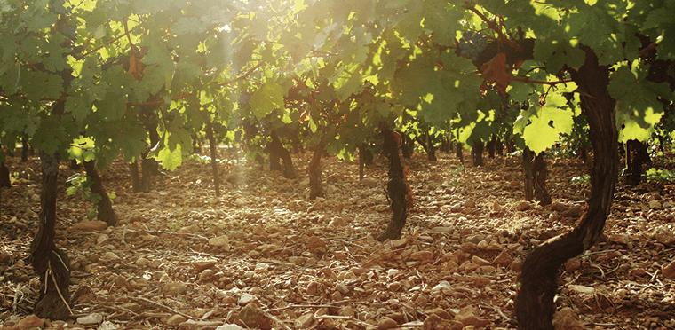 El vino y lo que define su carácter