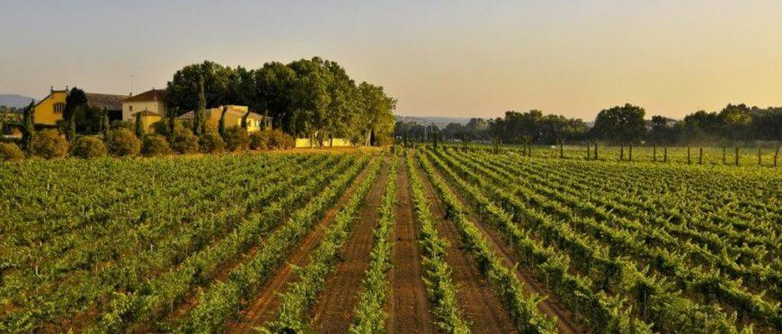 Antología Miguel Torres: los mejores vinos que no te debes perder